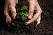 20110317185955-razones-para-plantar-arboles1.jpg