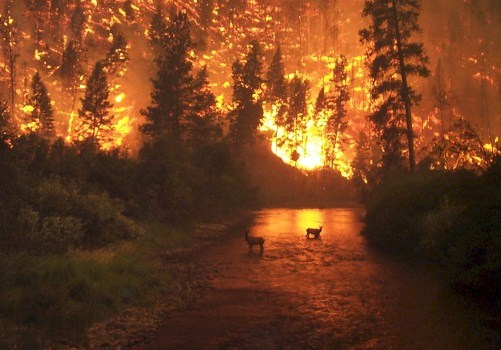 20120110031636-incendios-forestales-660x3501.jpg